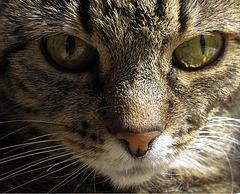 Cats can't speak, that's common sense - Yoruichi