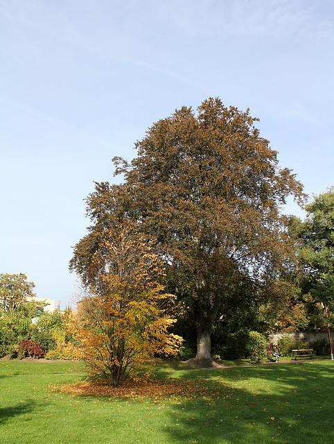 Jardin Lecoq - Clermont - 63 (3)