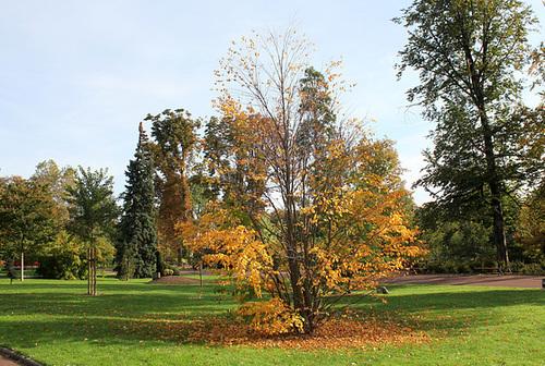 Jardin Lecoq - Clermont - 63 (4)