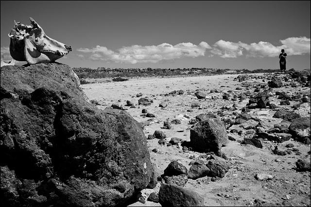 Fuerteventura, Islas Canarias, 2013.
