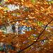 Herbstwanderung - aŭtuna promenado