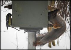 bird feeding house