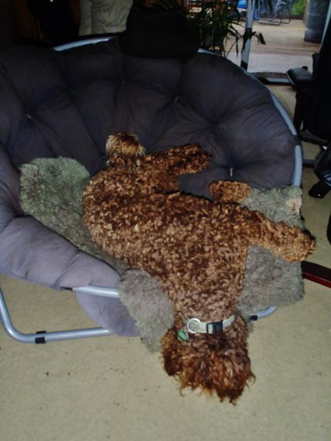 Coco sleeps in interesting ways