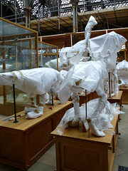 paleo mummies