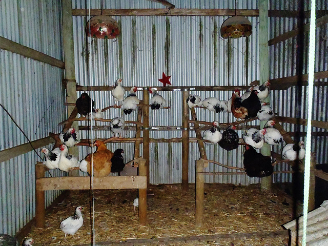 chicken house of variety
