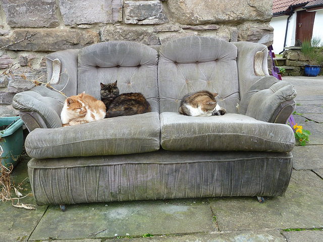 Happiness is an old sofa in the sunshine