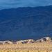 Death Valley (3412)