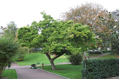 Partie centrale (5)-Magnolia