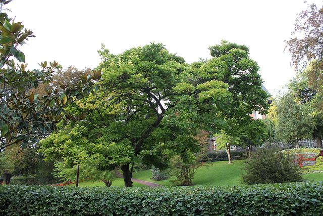Partie centrale - Magnolia