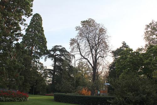 Les Géants Séquoïas , des Cèdres , Marronnier plus que centenaire