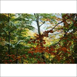 Autumn impressions.