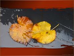 Herbst ✿