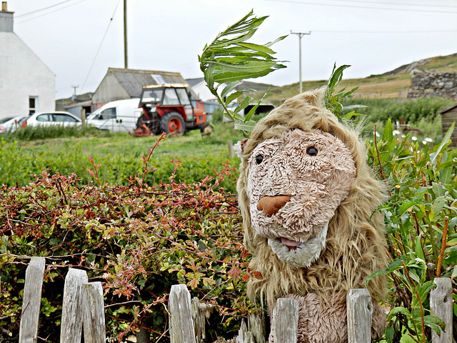 The Crofter's lion