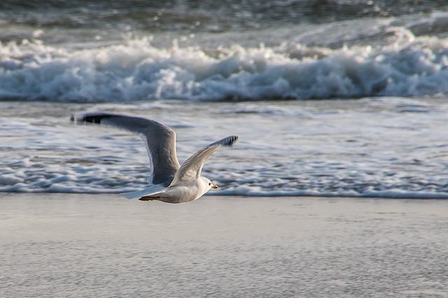 Möwe - Seagull