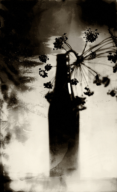 Midnight, Fullmoon, The Bottle & The Dill Seedhead