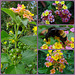 Lantana Collage with Bumble Bee