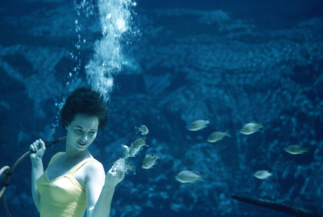 Feeding the Fish at Weeki Wachee Springs, 1950s