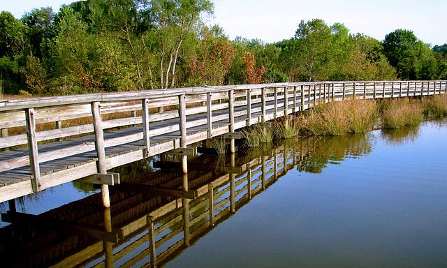 Boardwalk Reflection 2