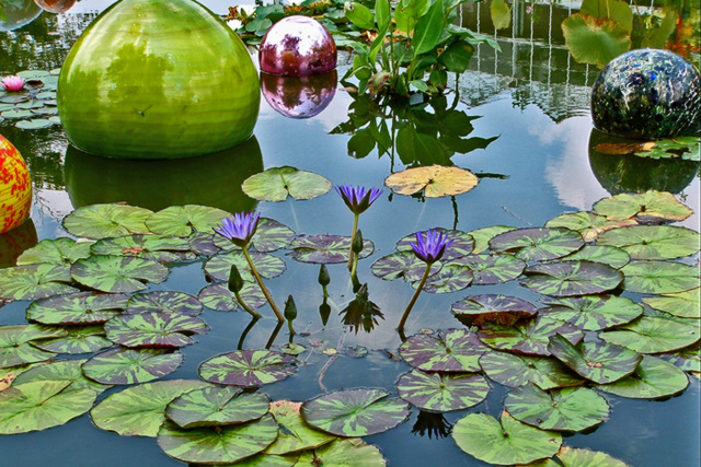 Waterlilies with Chihuly