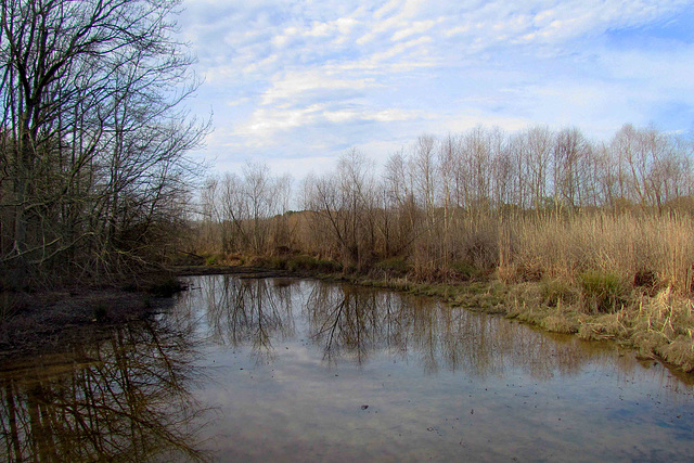 Wetland Reflection