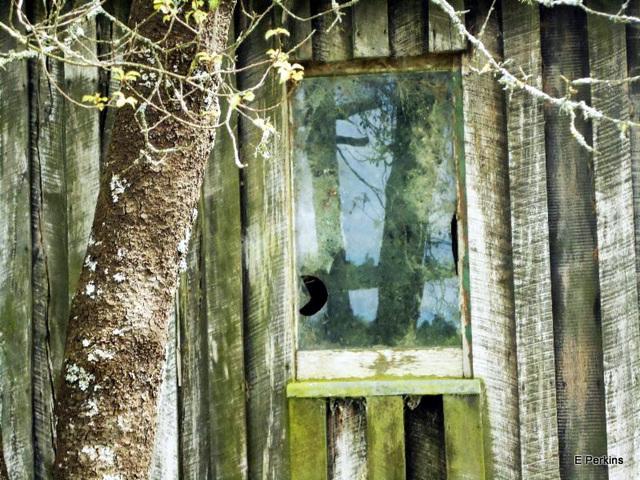 Reflections in broken window