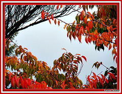 Frame of Autumn Leaves.