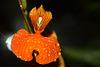 Orchidee (Wilhelma)