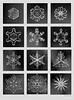 Collage Schneekristalle