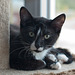 Cat 143 - Percy