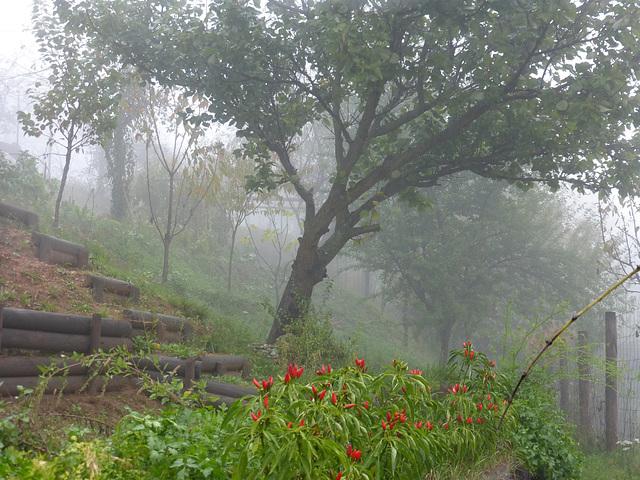 Nebbia nell'orto di Gabriele