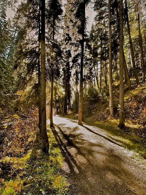 Bridge Creek Trail