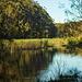The wetlands nature reserve