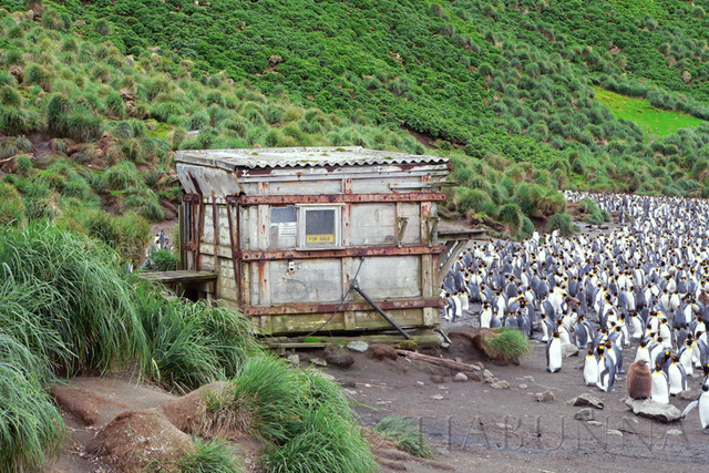 The old Sandy Bay hut - and neighbours