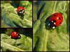 ▲ ★•´¯`❤► •love ladybug• ◄❤´¯`•★▲