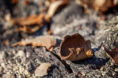 Bokeh Thursday: Acorn Destruction on Top of Destroyed Tree House & Oak Tree (4 inset pictures!)