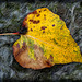 """Colorful """"Autumn Flower"""" Laying on our Dry Pond"""