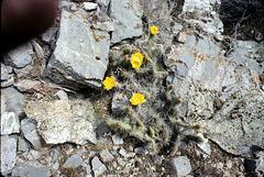 3-06-blooming_cactus_adj