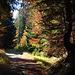 Herbstwald in Kärnten
