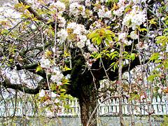 Spring 2011 in our garden