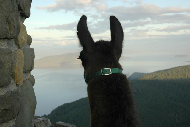 Ranger Dusty on Mount Constitution