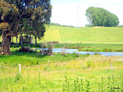 Stream through paddocks