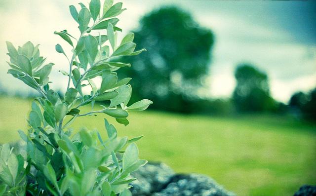 True Blue Kiwi Green