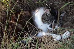 20140716 4034VRAw [D~MI] Hauskatze Molly, Hille