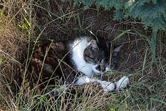 20140716 4033VRAw [D~MI] Hauskatze Molly, Hille