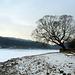 Brno Reservoir in Winter - A Tree