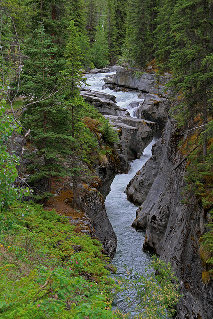 Maligne River and Canyon