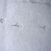 20101218 04846DSCw [D~LIP] Spuren im Schnee, Bad Salzuflen