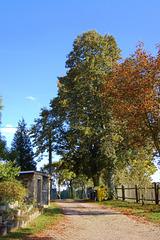 arboj (Bäume)