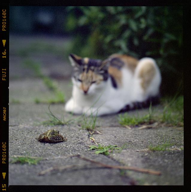 Milou and the frog