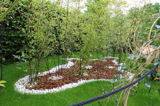 Le parfum du blanc- Jardin 19- Bambou = Phyllostachys nigra
